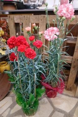 Un arrivage de belles plantes exterieures vous attend chez CAPUCINE fleurs à Mouy.